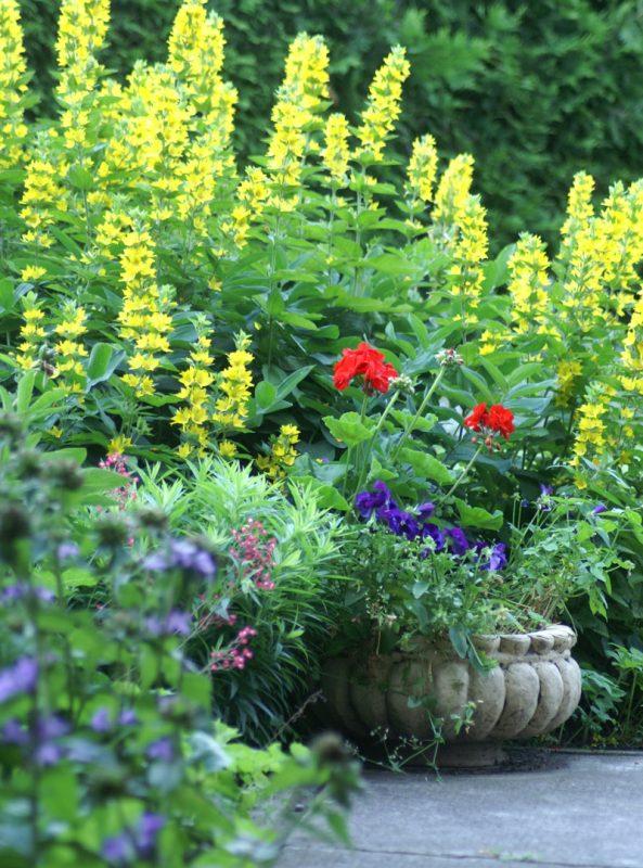 Nasadzenia roślinności