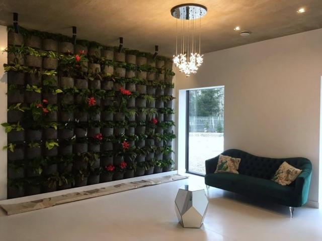 Projektowanie i wykonywanie zielonych ścian w Białymstoku Proogród