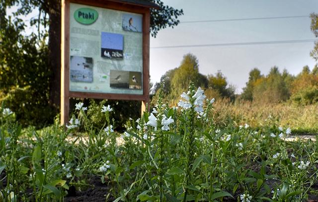 zakładanie ogrodów Białystok