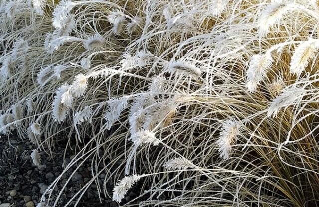 Rabata z traw